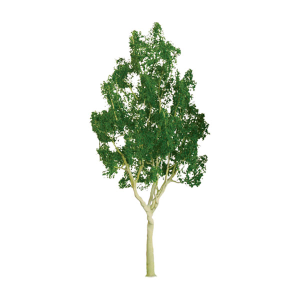 Z Scale Mountain Gum Tree 1 inch (6 pack)